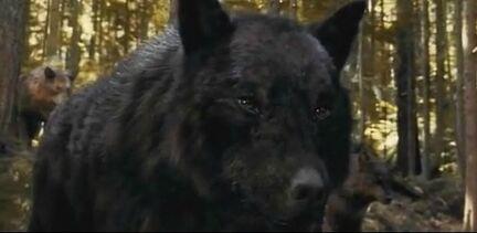 Sam-Wolf-Form