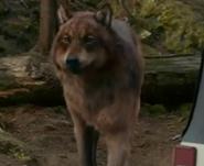 185px-Eclipse 12 wolf jake