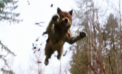 New-moon-wolf-jumping