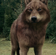 Eclipse 14 wolf jake 2