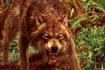 Jacob-wolf-form-twilight-series-14750775-600-400