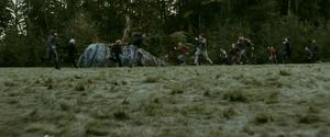 Cullen vs nouveau-nés