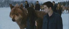 Jacob-nessie-bella-edward-family