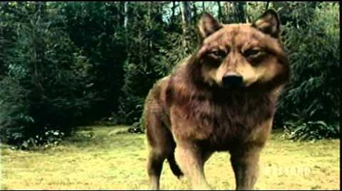 Twilight Saga Eclipse Battle Vampires & Wolf Pack Fighting Scene