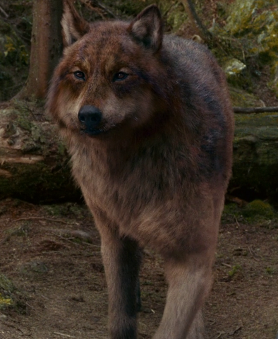 File:Eclipse 12 wolf jake.png