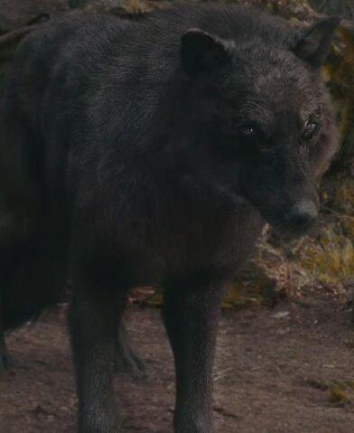 File:Sam s Eclipse Wolf Form by urimaginaryfriend.jpg