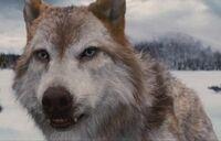 Wolfleah