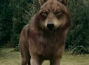 185px-Eclipse 14 wolf jake 2