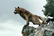 180px-Wolfonrocks