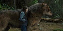 Bella-Jacob-Wolf-Eclipse-e1321074303695