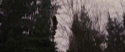 Breaking-dawn2-movie-screencaps.com-3485