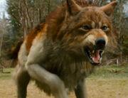 Jawolf