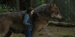 Bella-Jacob-Wolf-Eclipse