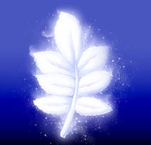 White Mountain Herb