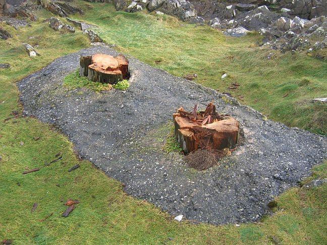 Stumps 2