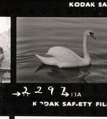 Swan 1 2297