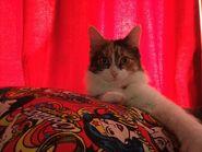 Leeloo Wonder Pillow