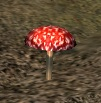 Ingredient - Red Toadstool - World