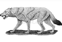 Dire Wolf (Roger Hall illustration)