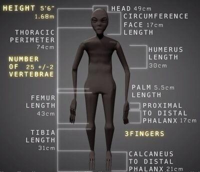 Maria - Nazca mummy specs