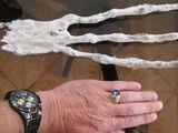 Cusco skull and hand