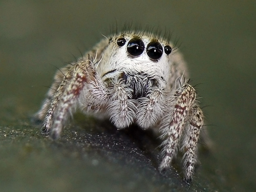 File:Cutespider4.jpg