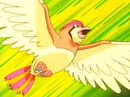 Pidgeotto spencer