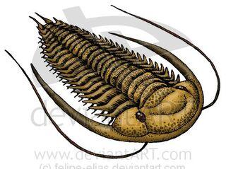 Paradoxides sp by felipe elias