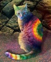 Rainbowcat.