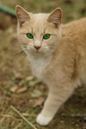misha ultimate warrior cats wiki fandom powered by wikia