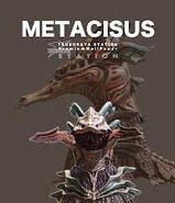 Metacisus