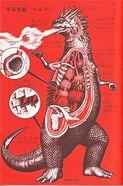 Bemular-anatomy