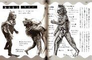 Ragon anatomy