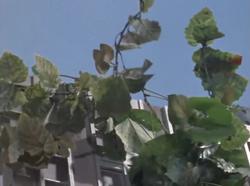 Plant Human Monster3