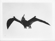 Giant Pteranodon 2