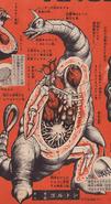 Goldon-anatomy