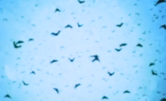 A swarm of bats