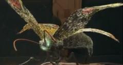 Doragory Moth