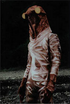 Cicada Human Color