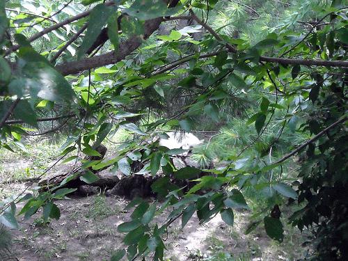 File:Zoo 86.jpg