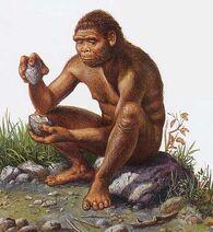 Homo erectus -4
