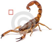 Doug the the scorpion