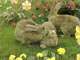 Teletubby Land Bunnies