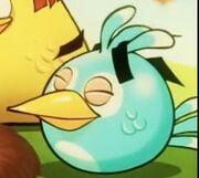 SnipBird