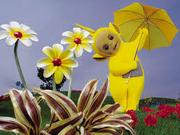 Laa laa and flowers