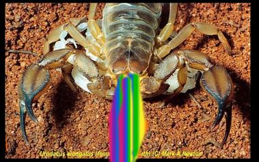 Doug-Rainbow Cannon