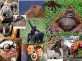 The Eye Monkeys