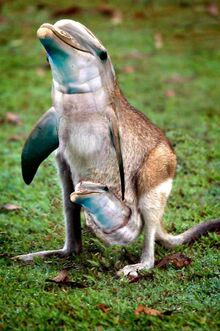 Dolphin kangaroo hybrid