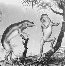 Dolphin evolution