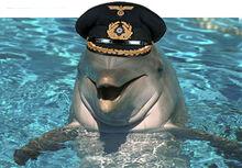 Dolphin nazi alien